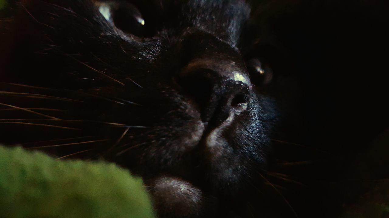 Cat♡ Cats Of EyeEm Cat Lovers Cats Cats 🐱 Cats Eyes Pet Photography  Petstagram Pets Of Eyeem Pet Love Catstagram Catsofeyem Gato Gatita  Gato😽 Gatosdeinstagram Gatosfelizes Gatoslindos Siamese Cat Siamese Kitty