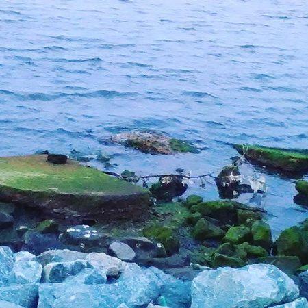 Seaside Water Moss Naturephotography Nature