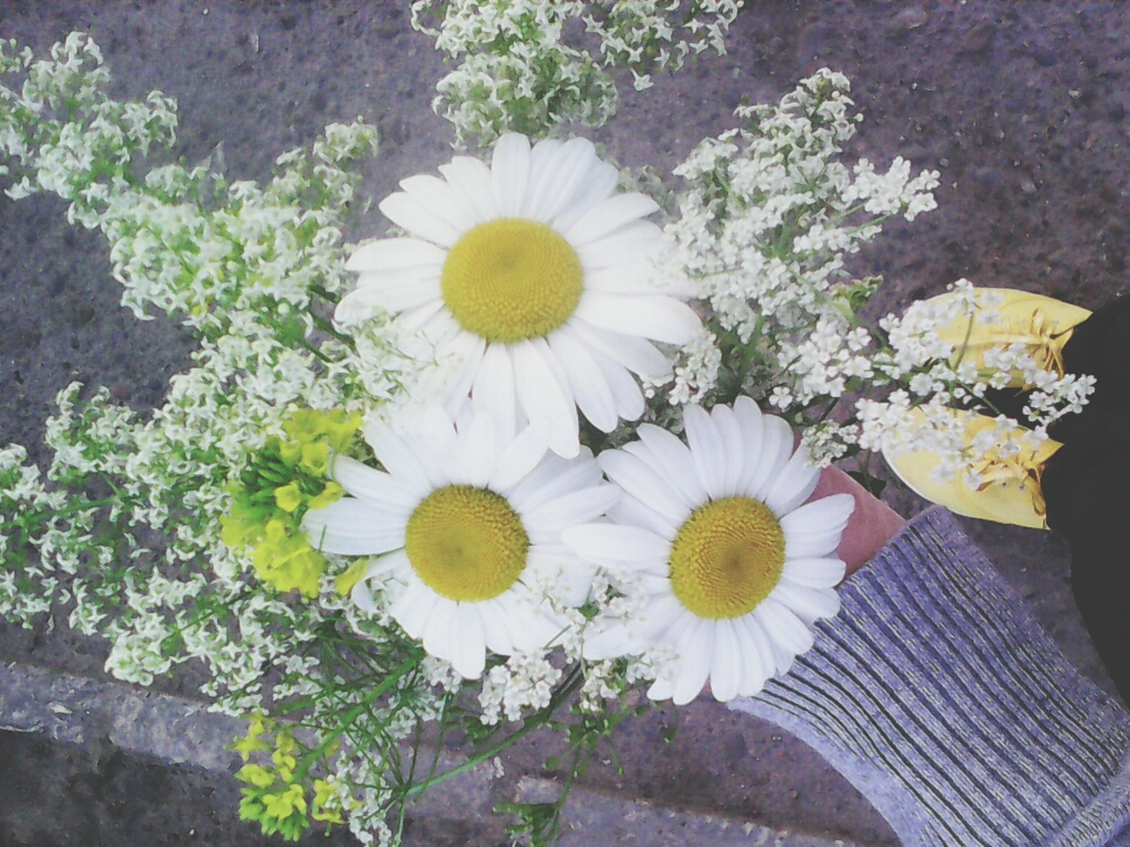 flower, freshness, fragility, petal, flower head, growth, high angle view, beauty in nature, white color, plant, blooming, daisy, nature, yellow, in bloom, pollen, leaf, field, day, blossom