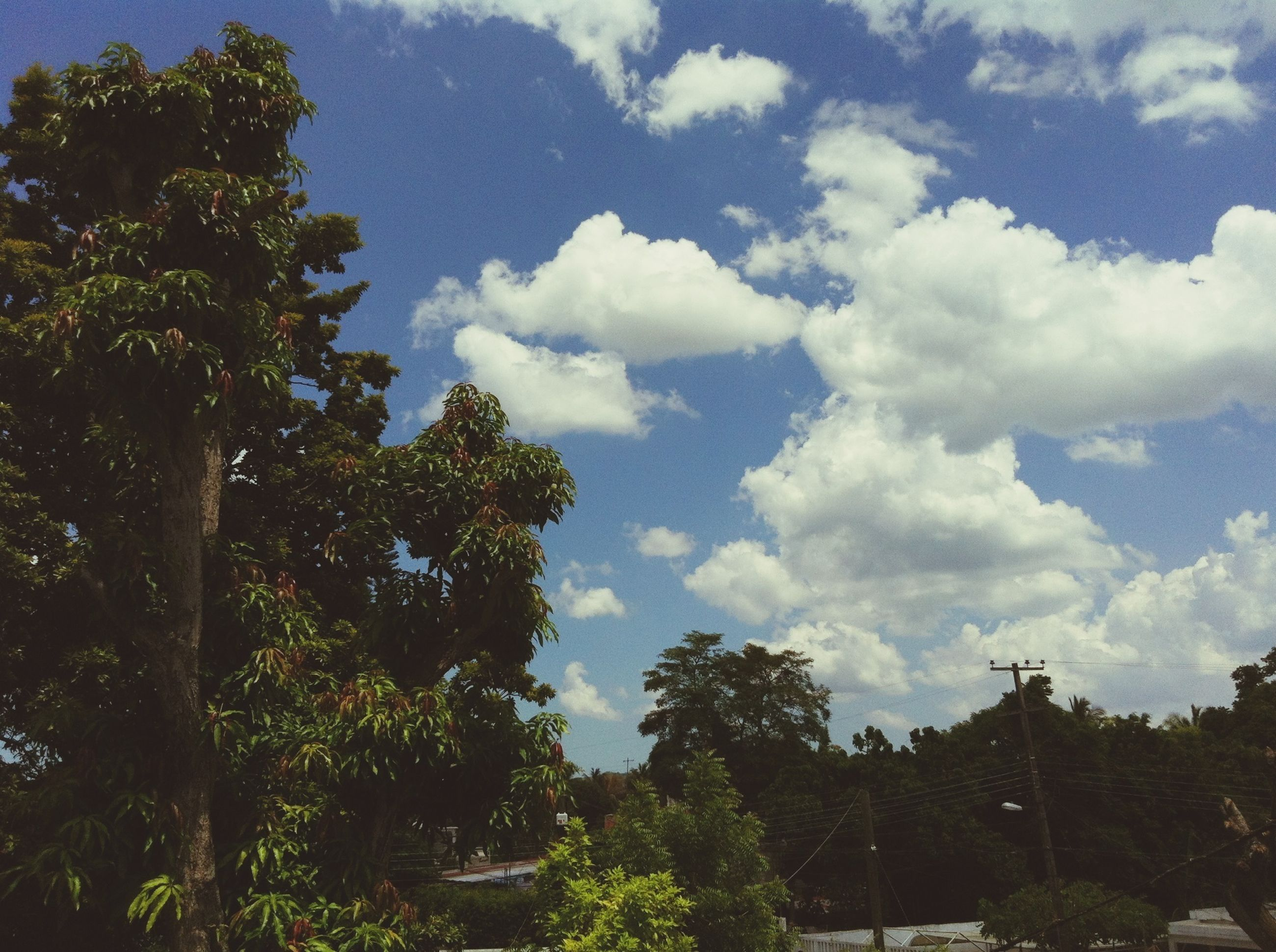 tree, sky, tranquility, cloud - sky, tranquil scene, growth, beauty in nature, scenics, nature, cloud, low angle view, cloudy, landscape, day, outdoors, non-urban scene, no people, blue, branch, idyllic