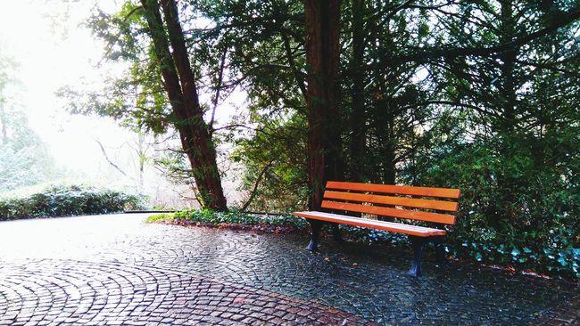 Heidelberg Germany Deutschland ławka Bench Graveyard Cemetery Cmentarz Nature Trees The Great Outdoors - 2016 EyeEm Awards