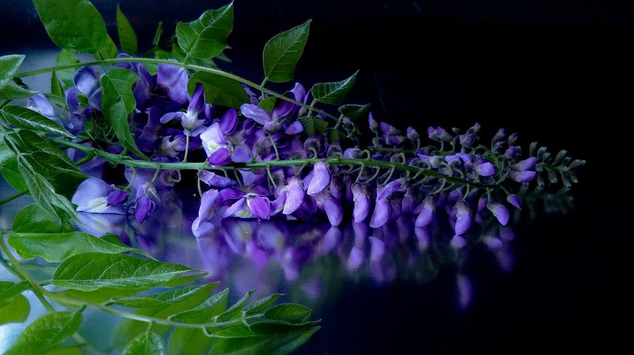 Glicine Beauty In Nature Day Flower Flower Head Fragility Freshness Glicine Grappolo Growth Leaf Nature No People Outdoors Plant Purple