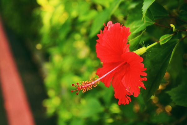Canon Canonphotography VSCO Vscocam Flowers Red Green Close-up Single Flower Nature