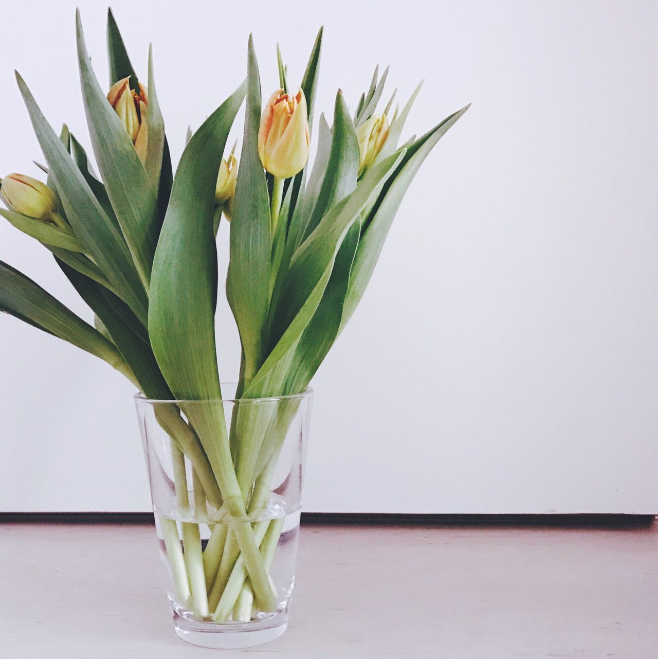 Spring is here 🌷 Still Life Tulips Vase Flower Flower Collection Growth Nature Plant Freshness White Background Flower Arrangement Interior Views Interior Style Beauty In Nature Copy Space Springtime Spring Flowers EyeEm Best Shots EyeEm Nature Lover