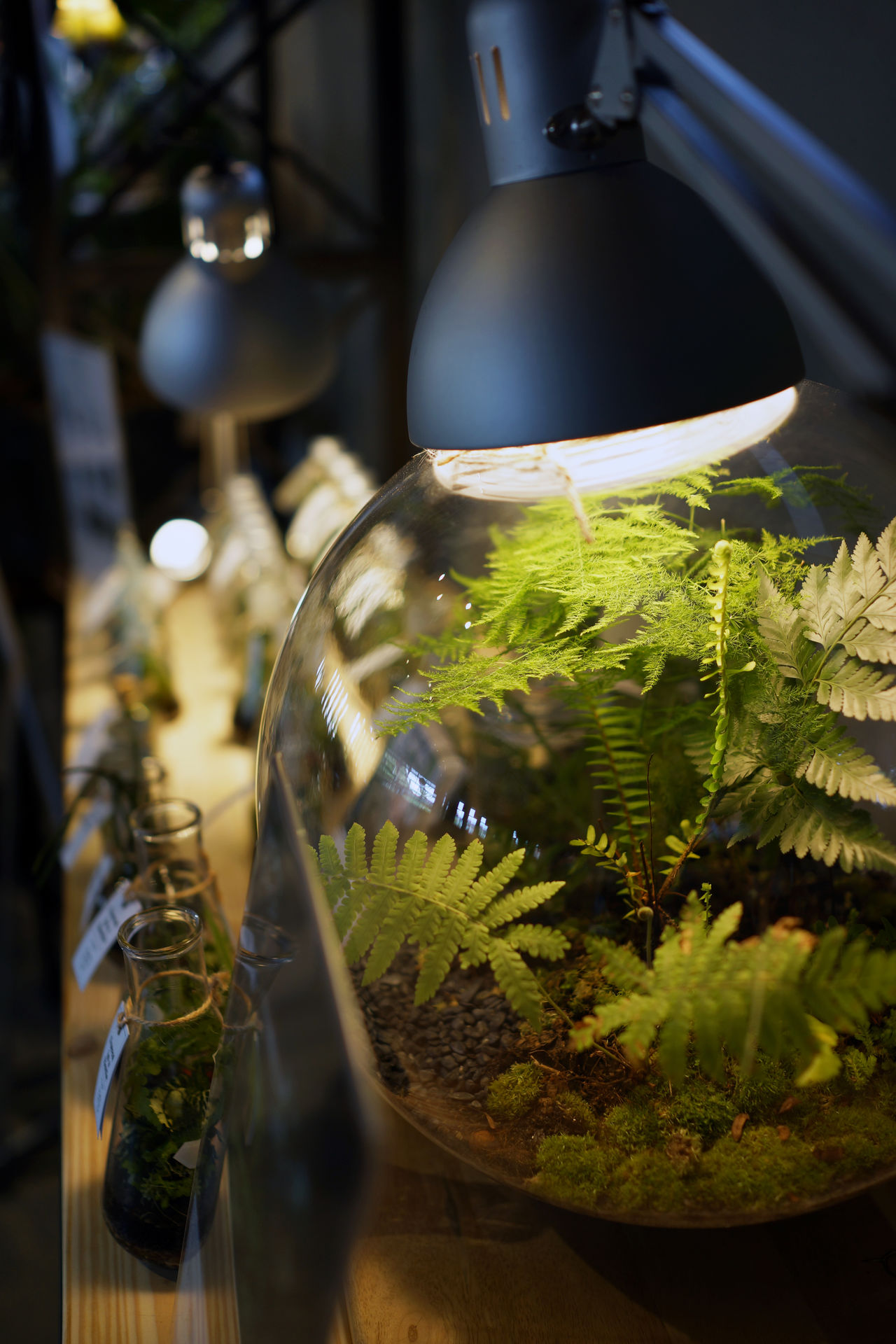 Plant terrarium Adapted To The City Botany Bottles Check This Out Close-up Fé Greenhouse Growth Indoors  Light Source Photosynthesis Plant Potted Plant Reflection Terrarium