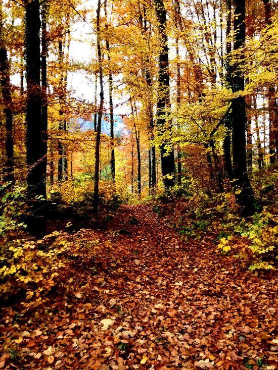 TreePorn Autumn Autumn Colors EyeEm Nature Lover Nature_collection Taking Photos Switzerland Autumn🍁🍁🍁