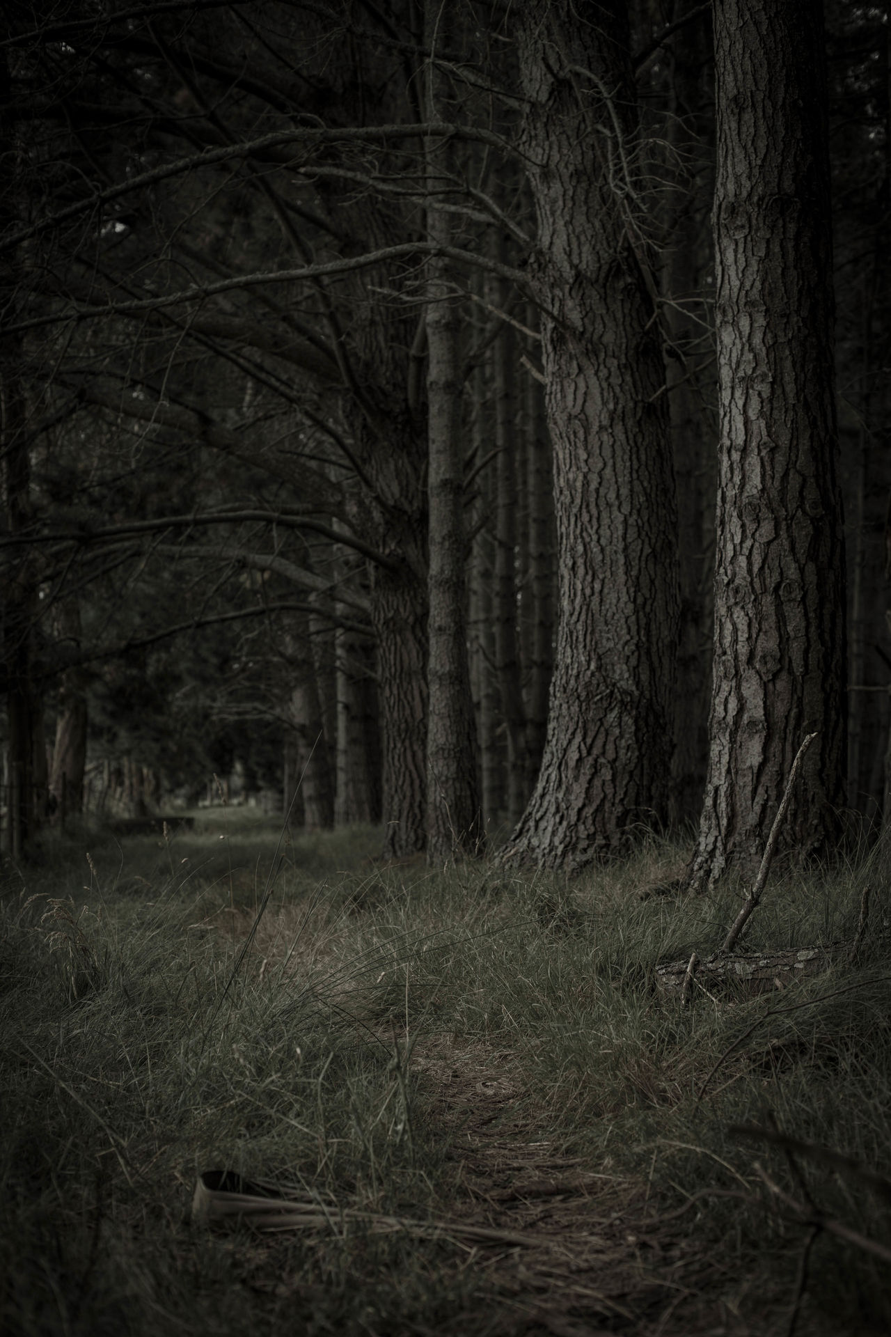 Beautiful stock photos of wald, Dark, In A Row, Spooky, abundance