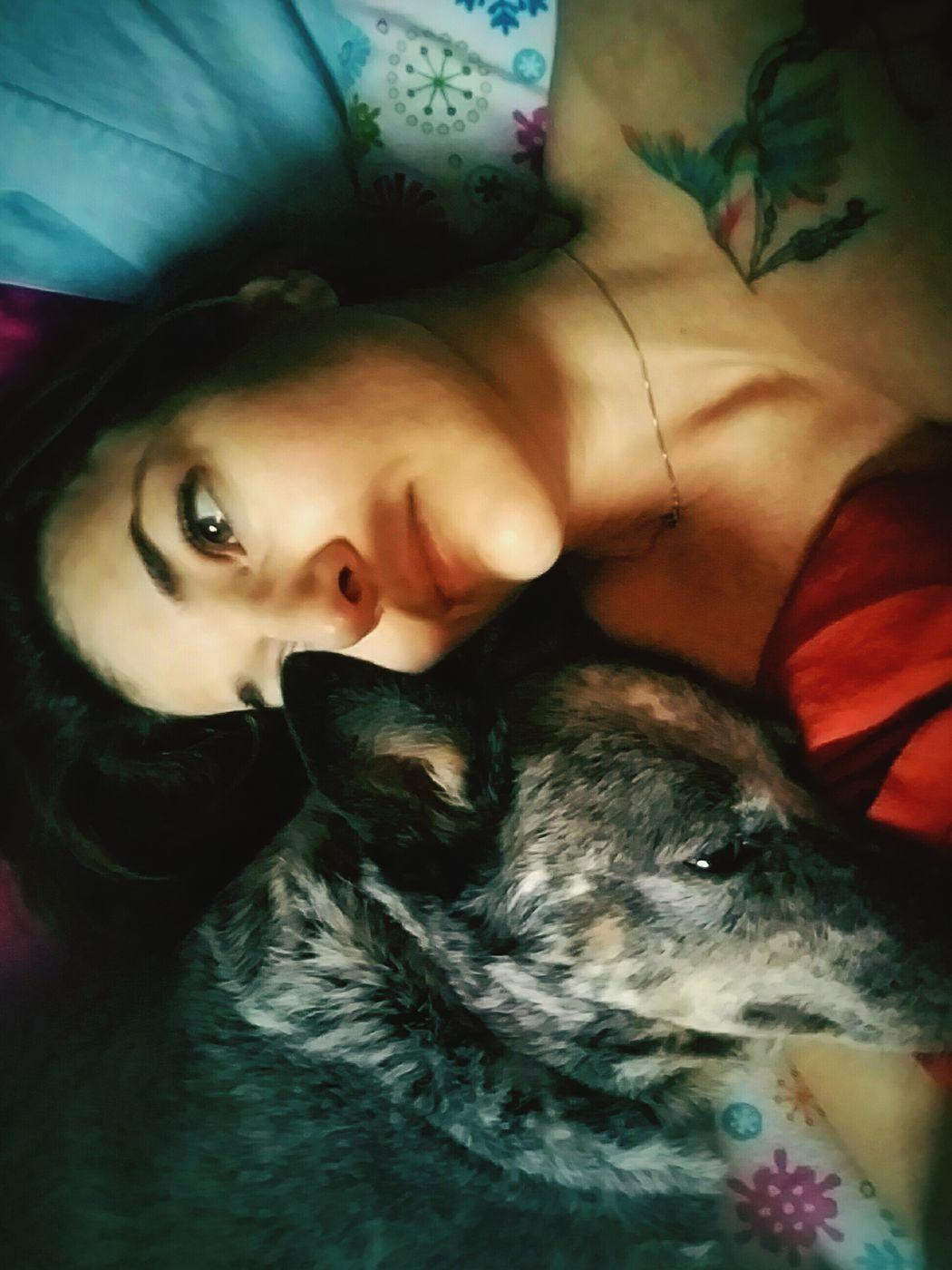 Dog Doggie Cuddles Dog❤ Unconditional Love Always Dogslife Meandmybestfriend 💗💗 Australian Cattle Dog