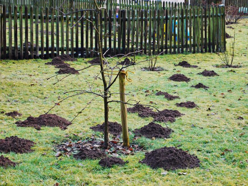 Day Fences & Beyond Garden Grass Mole Hills Nature No People Outdoors Wintertime