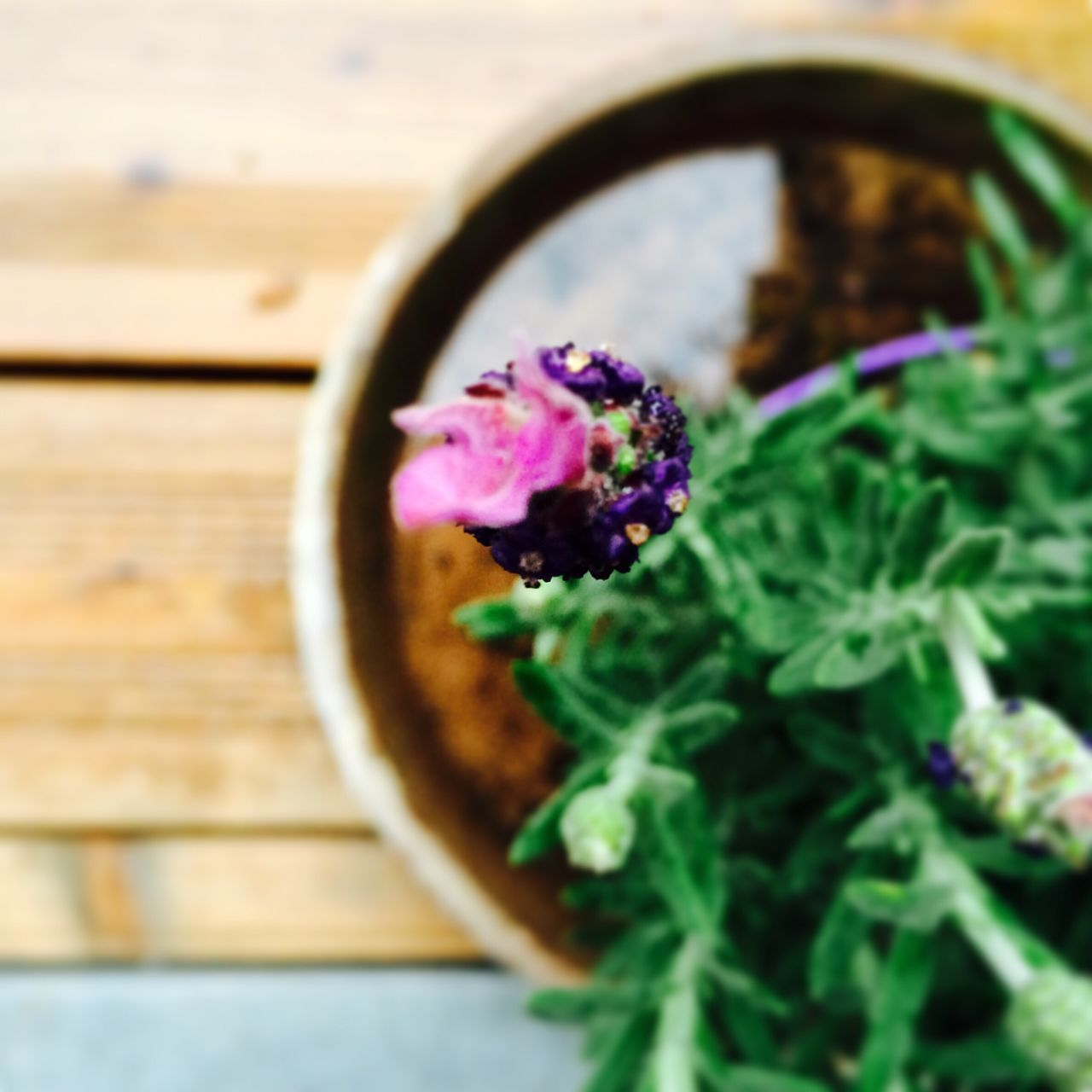 freshness, table, no people, close-up, indoors, flower, food, day