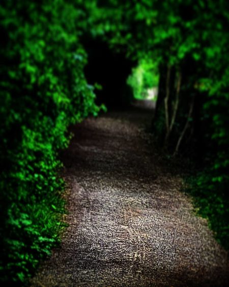 Loneliness Lonely Walk Loneliness Sad Sadness Lost Pain Heartbroken Finding Peace Dirt Road Road Nature Tree The Way Forward Outdoors No People Forest Beauty In Nature Close-up