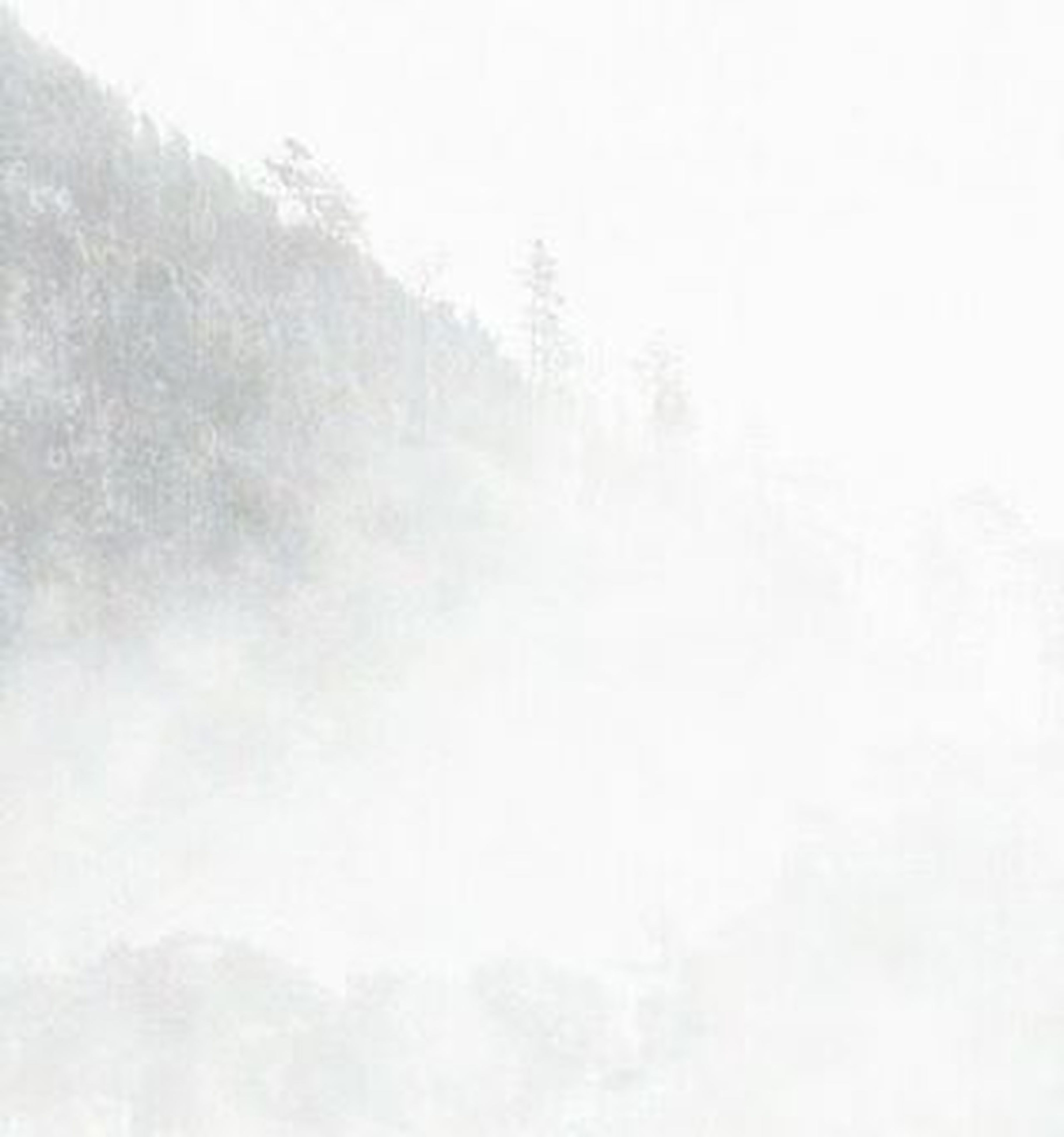 fog, weather, foggy, copy space, tranquility, winter, beauty in nature, nature, cold temperature, tranquil scene, low angle view, scenics, white color, snow, covering, season, tree, sky, day