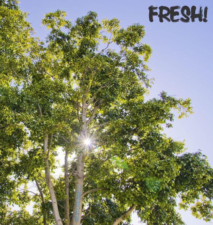 Nature Lens Flare San Francisco Trees