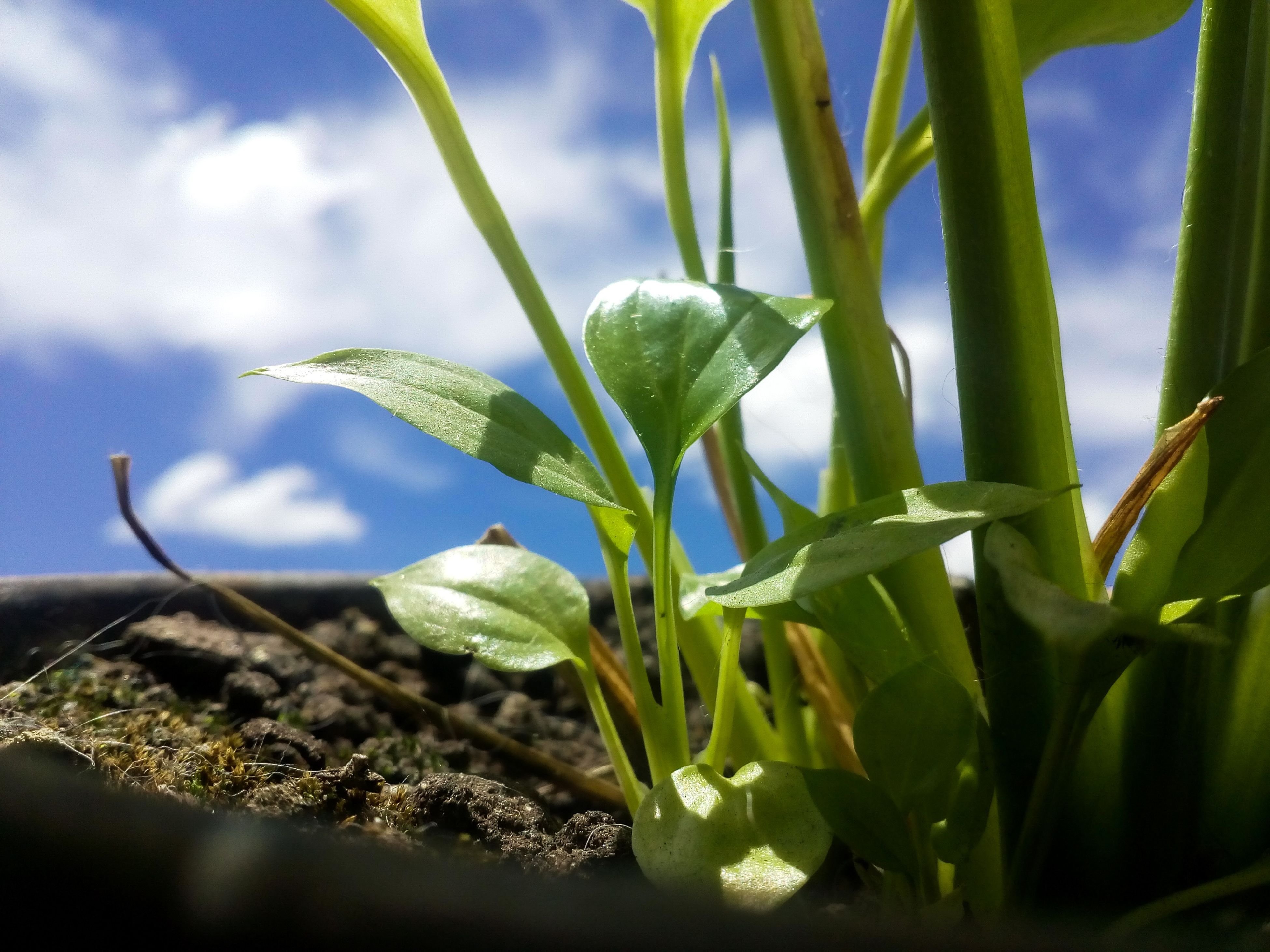 growth, nature, leaf, close-up, plant, freshness, drop, green color, no people, beauty in nature, day, water, wet, sky, outdoors, beginnings, new life, fragility