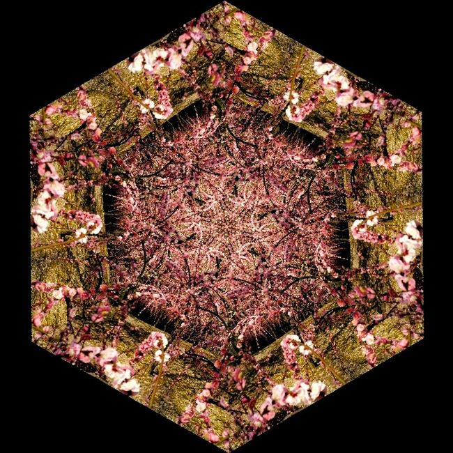 Kareidoscope Spring Flowers Plum Blossom