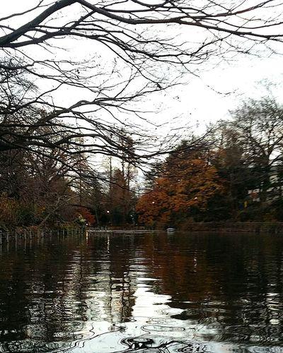 Inokashira Park Lake Autumn Colours Reflections Musashino Tokyo Tokyo,Japan TokyoDec2016