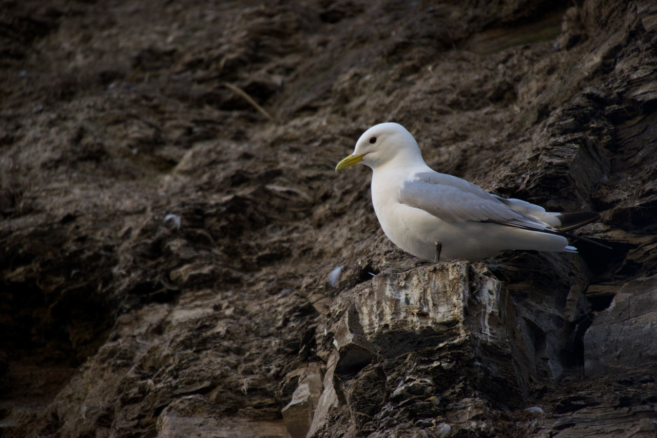 Low Angle View Of White Seagull On Rock Formation