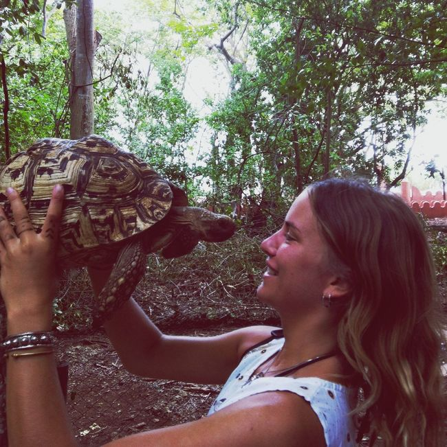 kissing the turtles