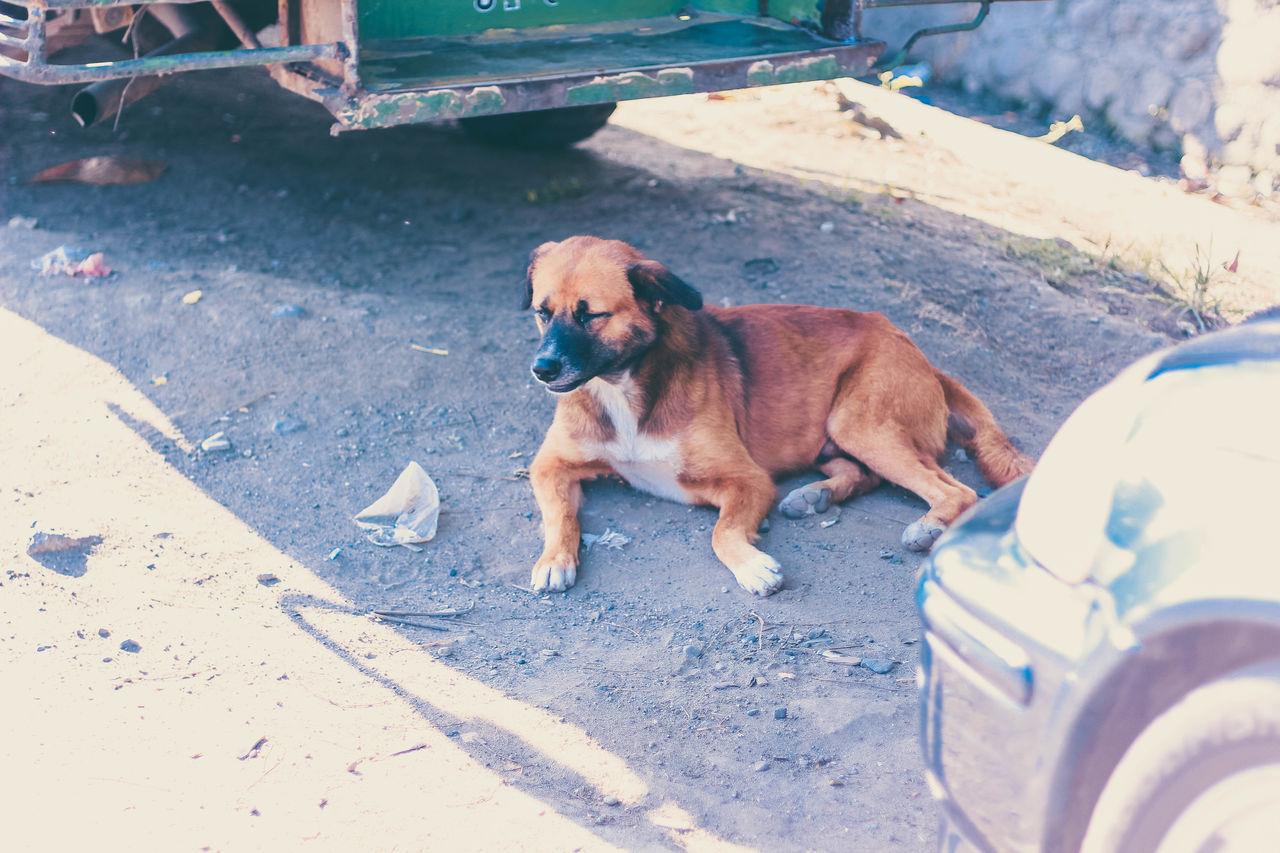 Brown Eyes Dog Of The Day Dog Pod EyeEm Best Shots Eyeem Dog World OFFICIAL Photos Club 🐶🌍😄👍 EyeEm Gallery I Love Dogs I Love Dogs4ever Just A Door Street Dog EyeEmNewHere