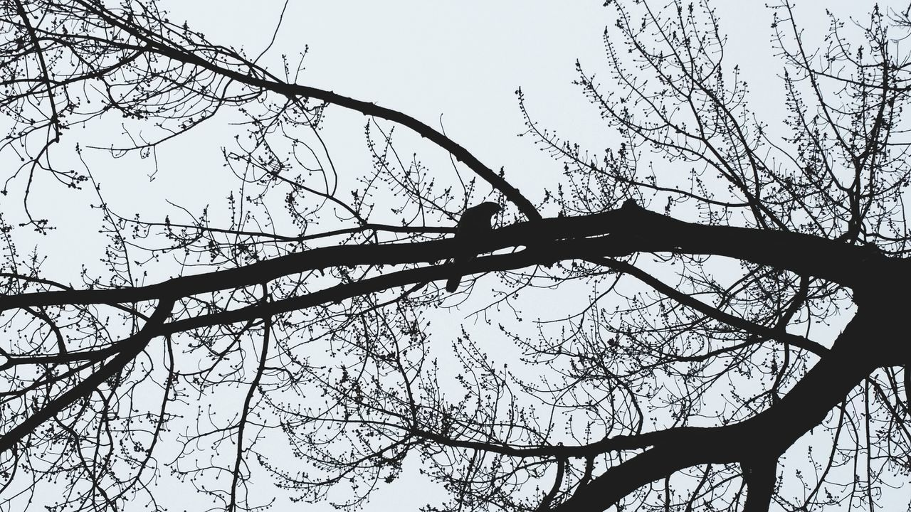 🌳 Tree Low Angle View Clear Sky No People Sky Nature Branch Outdoors Close-up Day Bird On Branch Silhouettes Silhouette_collection Silhouette Photography Silhouette Black And White Bird EyeEmNewHere