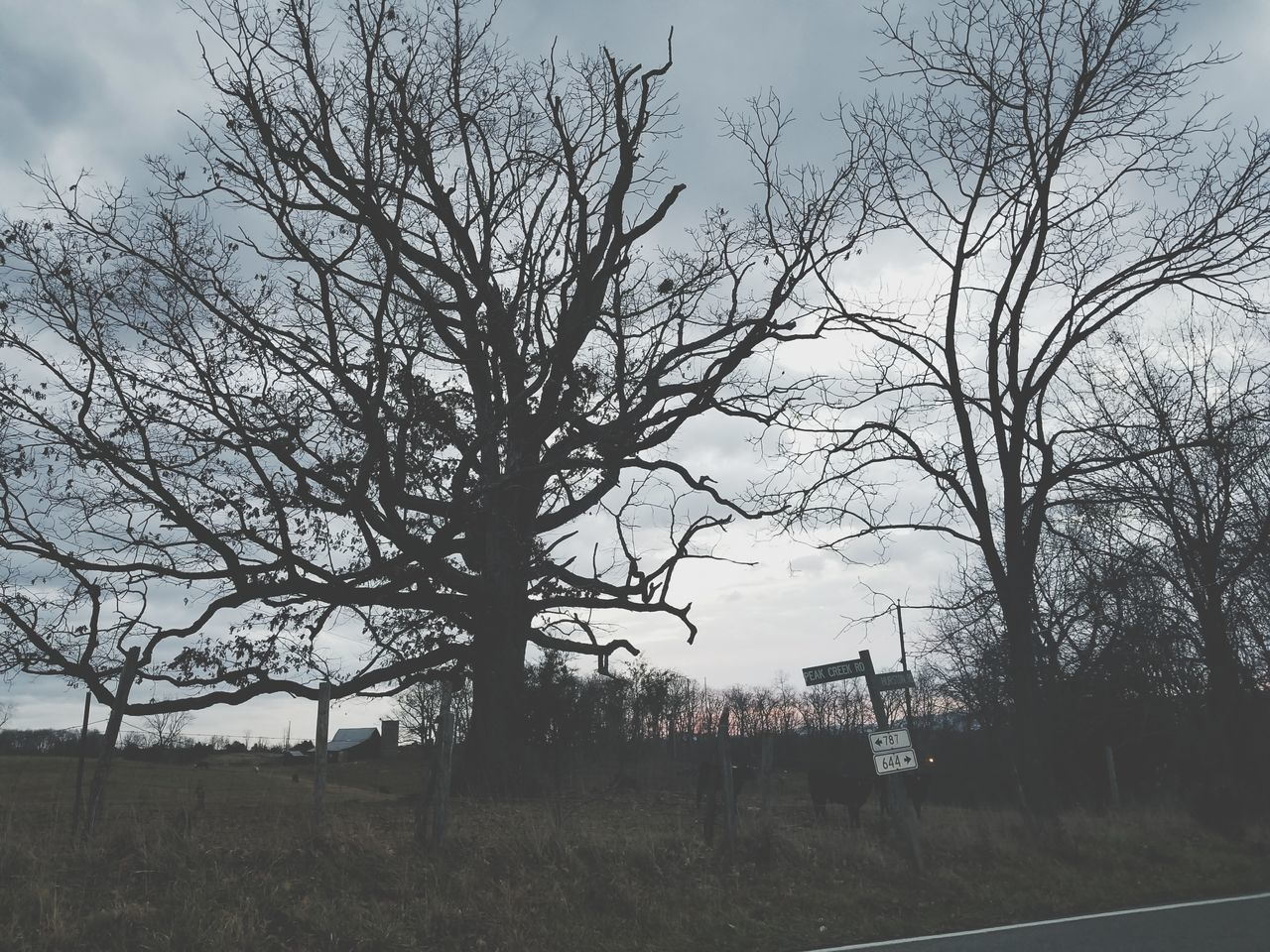 bare tree, tree, sky, day, no people, nature, outdoors, branch, landscape, beauty in nature, architecture