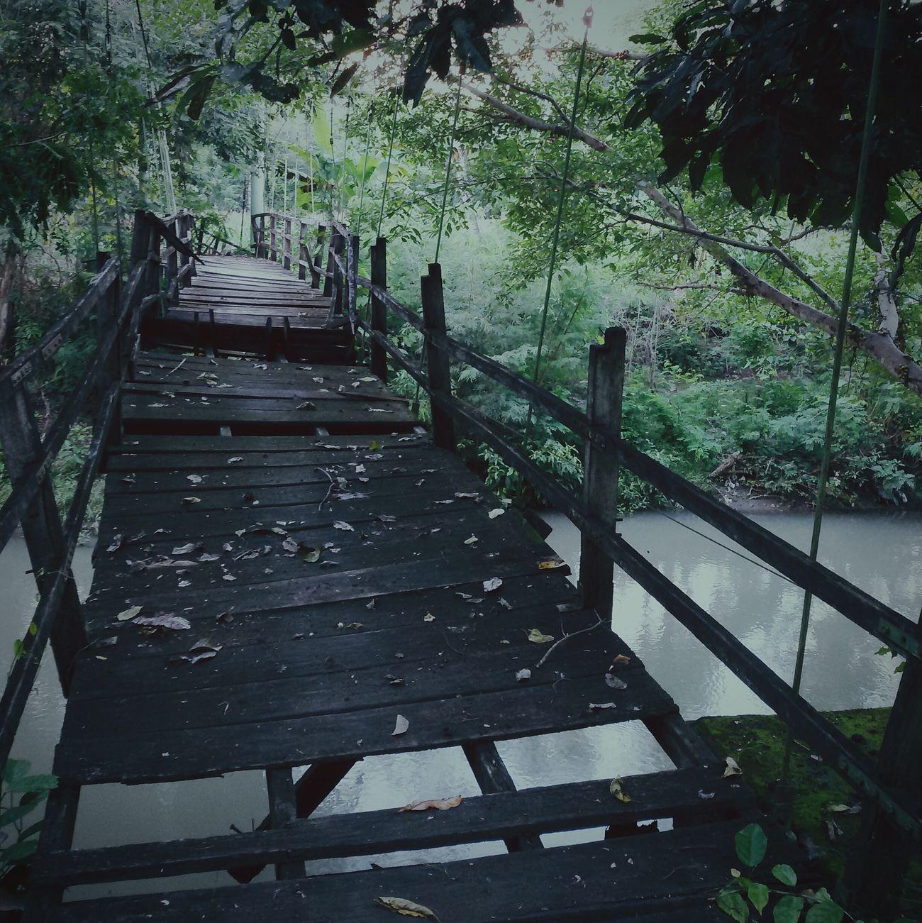wood bridge Nature Naturelovers Fotography Fotodroids Fotodroiding