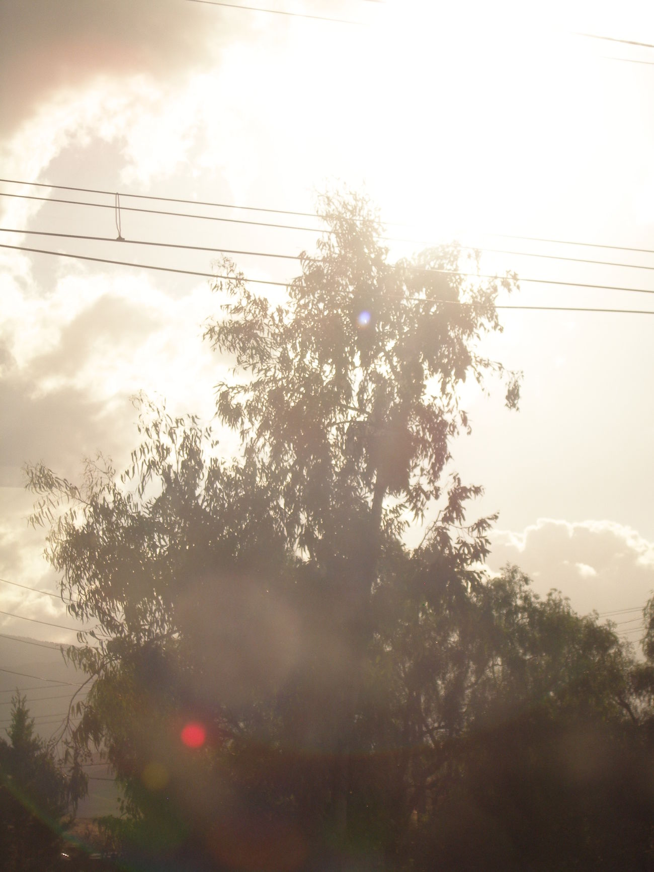 Suena 🎶🎧 Páginas tuyas. FabiánAntenas Lights Luces Light Luz Blanco White Tesis99 Window Ventanilla Ventana View Vistas Tren Train Travel Viajar árbol Tree Trayecto Route Destello Flare Blurred Transport