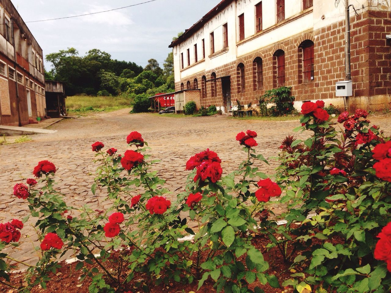 Beautiful stock photos of roses, Building Exterior, Cobblestone, Day, Flowerbed
