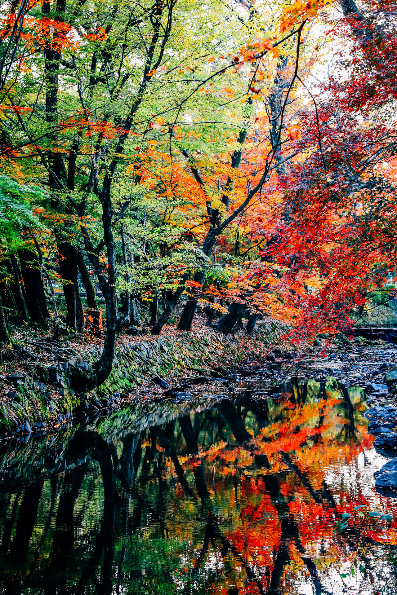 Autumn Beauty In Nature Branch Change Close-up Day Growth Leaf Nature No People Non-urban Scene Outdoors Scenics Tranquil Scene Tranquility Tree Water