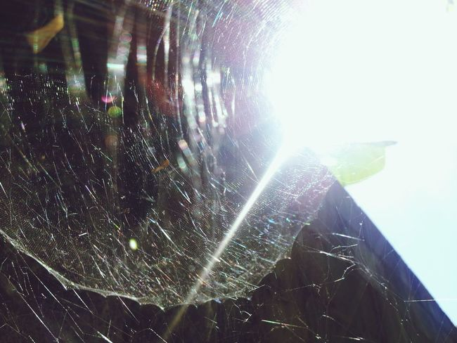 Spiderweb, Perfection Is Everywhere, Sunlight, Notes From The Underground