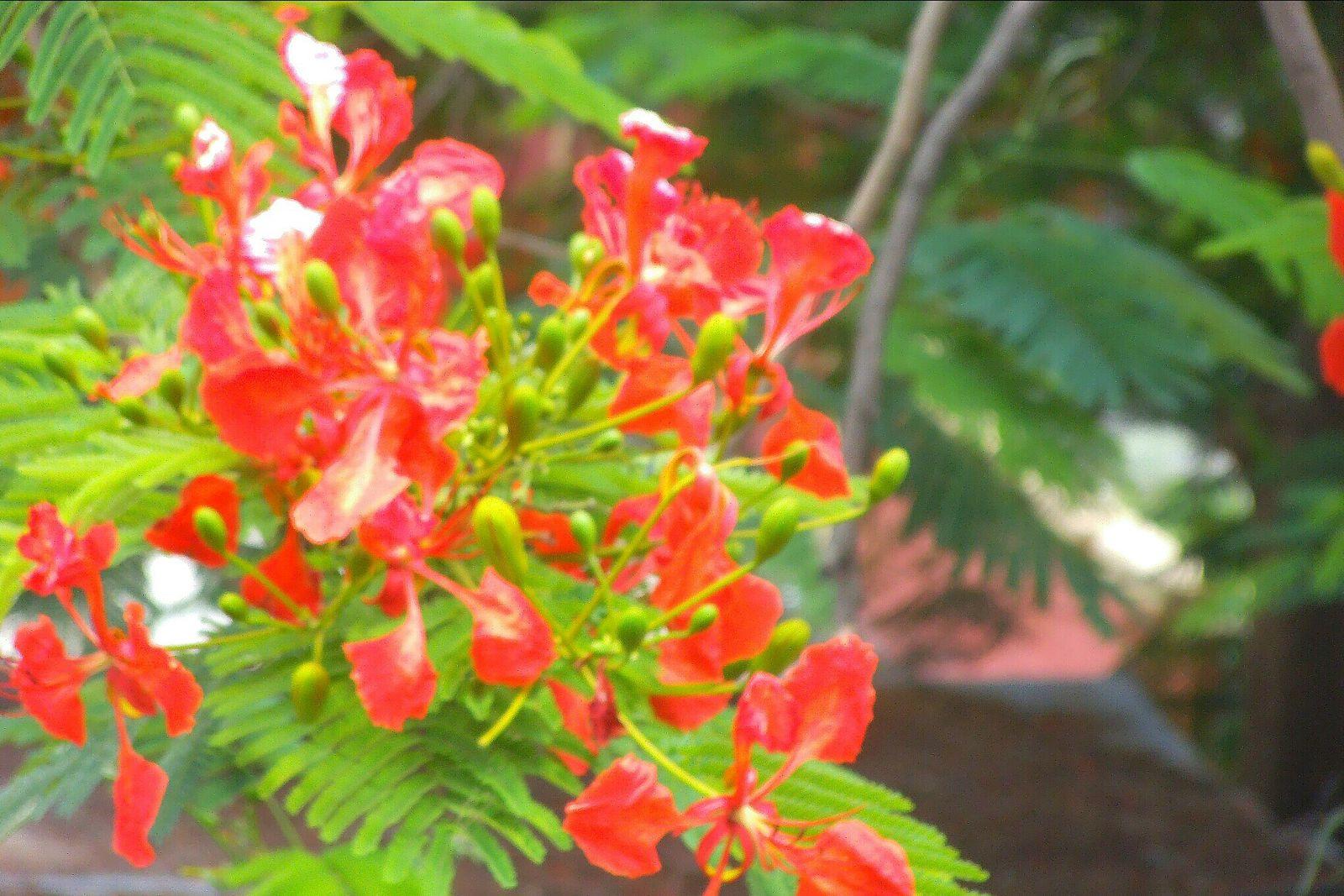 এই গ্রীষ্মের মাঝে যেন এক ছটাক বসন্ত., Taking Photos Udayan Upal_photography First Eyeem Photo