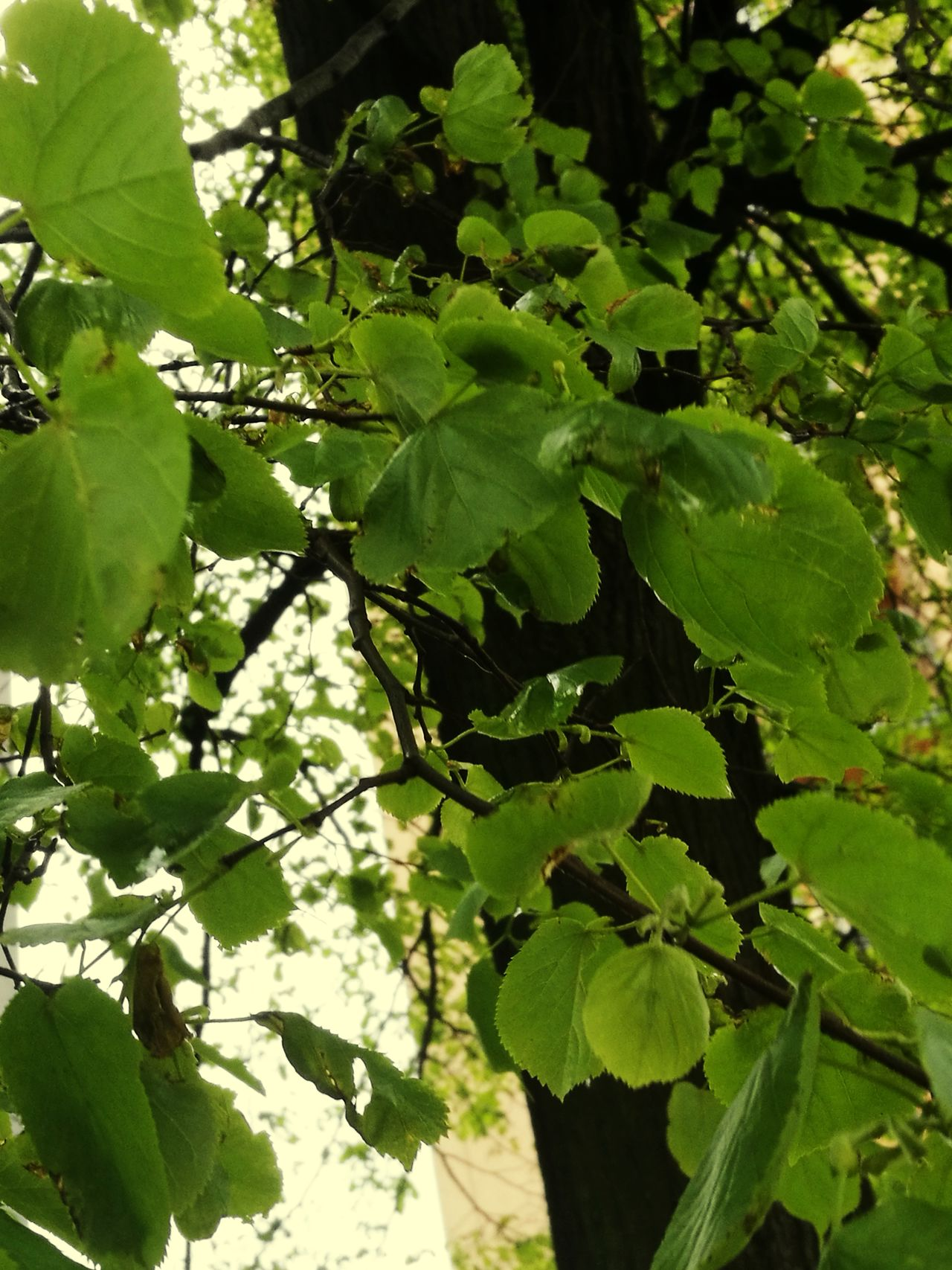 Green Color Tree Leaf Growth Nature Branch Outdoors Beauty In Nature No People Lush Foliage Day Sunlight Freshness Close-up Healthy Eating Water Sky