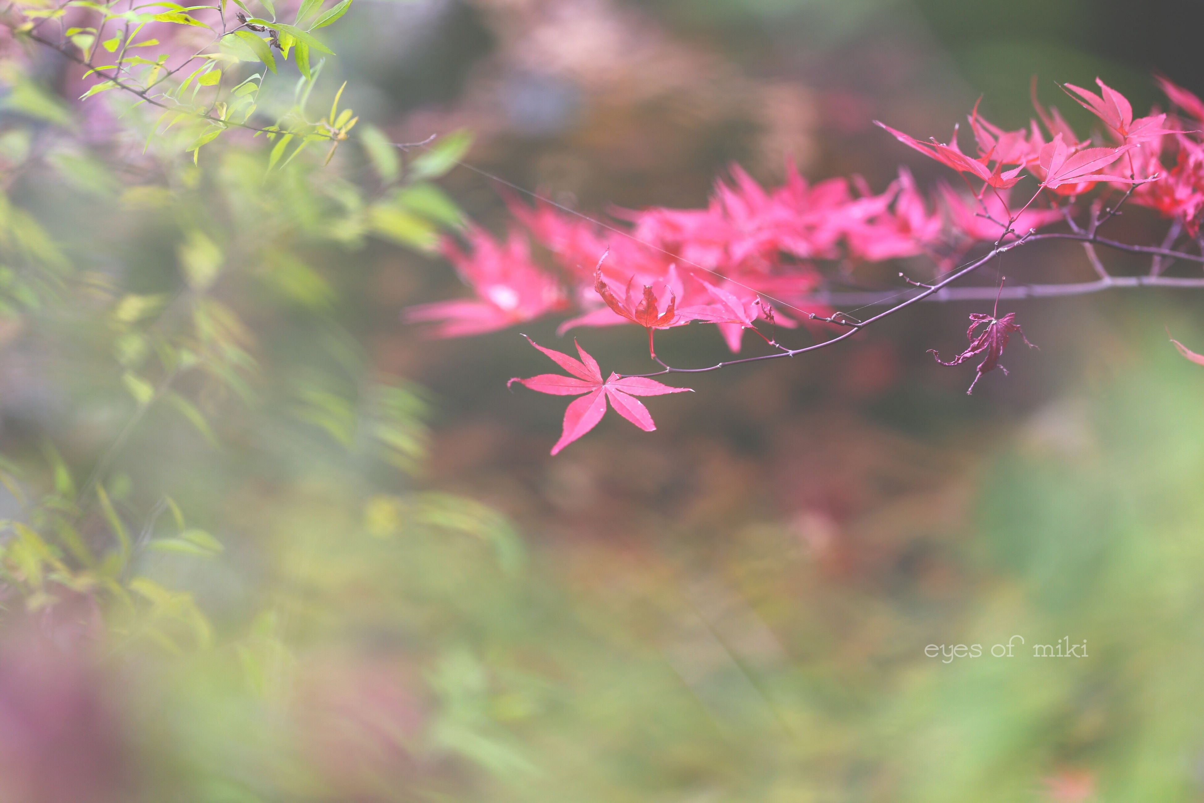 nature, growth, flower, plant, beauty in nature, fragility, freshness, no people, outdoors, close-up, leaf, day, flower head
