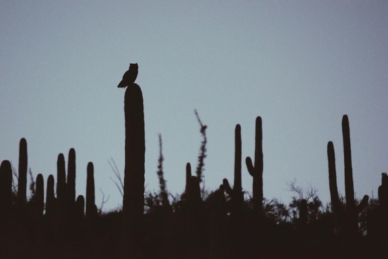 Beautiful stock photos of eule,  Animal Wildlife,  Animals In The Wild,  Bird,  Cactus