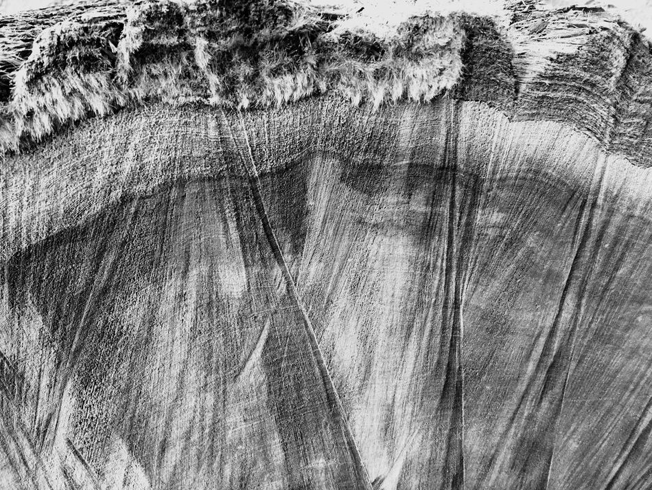 Backgrounds Textured  Rough Full Frame Pattern Wood - Material Abstract No People Close-up Nature Wood Grain Tree Day Outdoors Tree Ring Redwood Henry Cowell Redwoods State Park Felton California Black & White