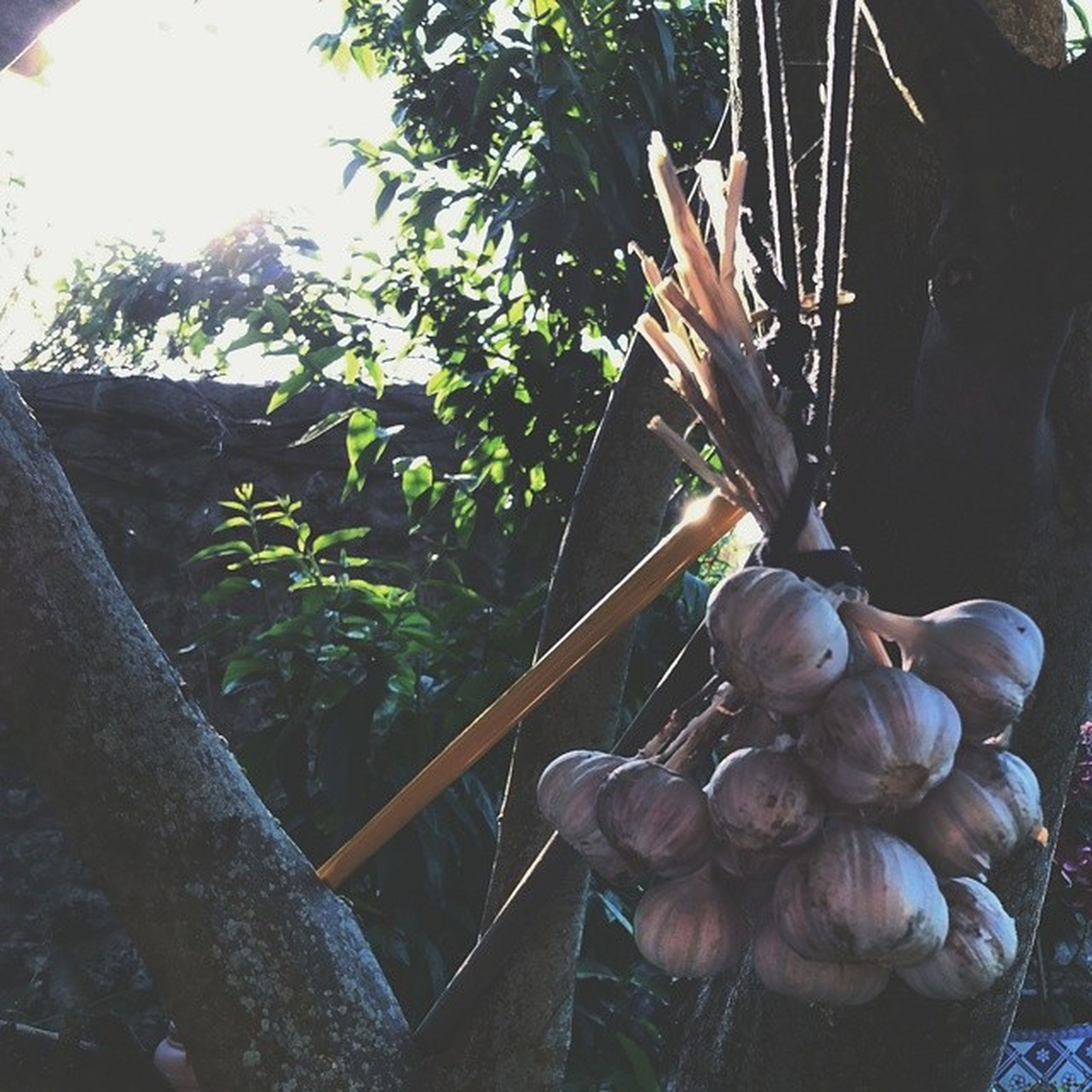 plant, table, growth, wood - material, flower, freshness, sunlight, close-up, tree, potted plant, nature, no people, indoors, day, hanging, front or back yard, wooden, wood, still life