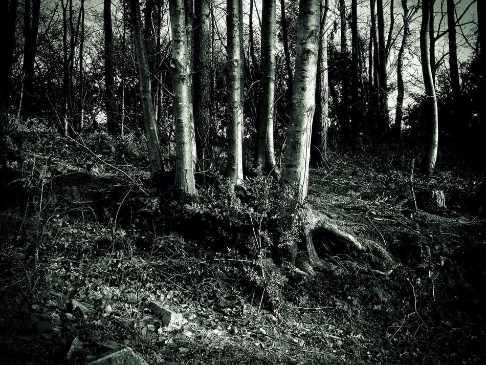 forest at Groombridge Forest