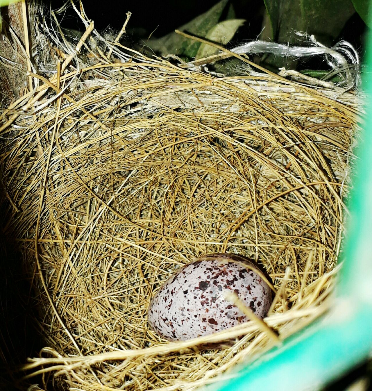 No People High Angle View Outdoors Close-up Nature Birds Egg