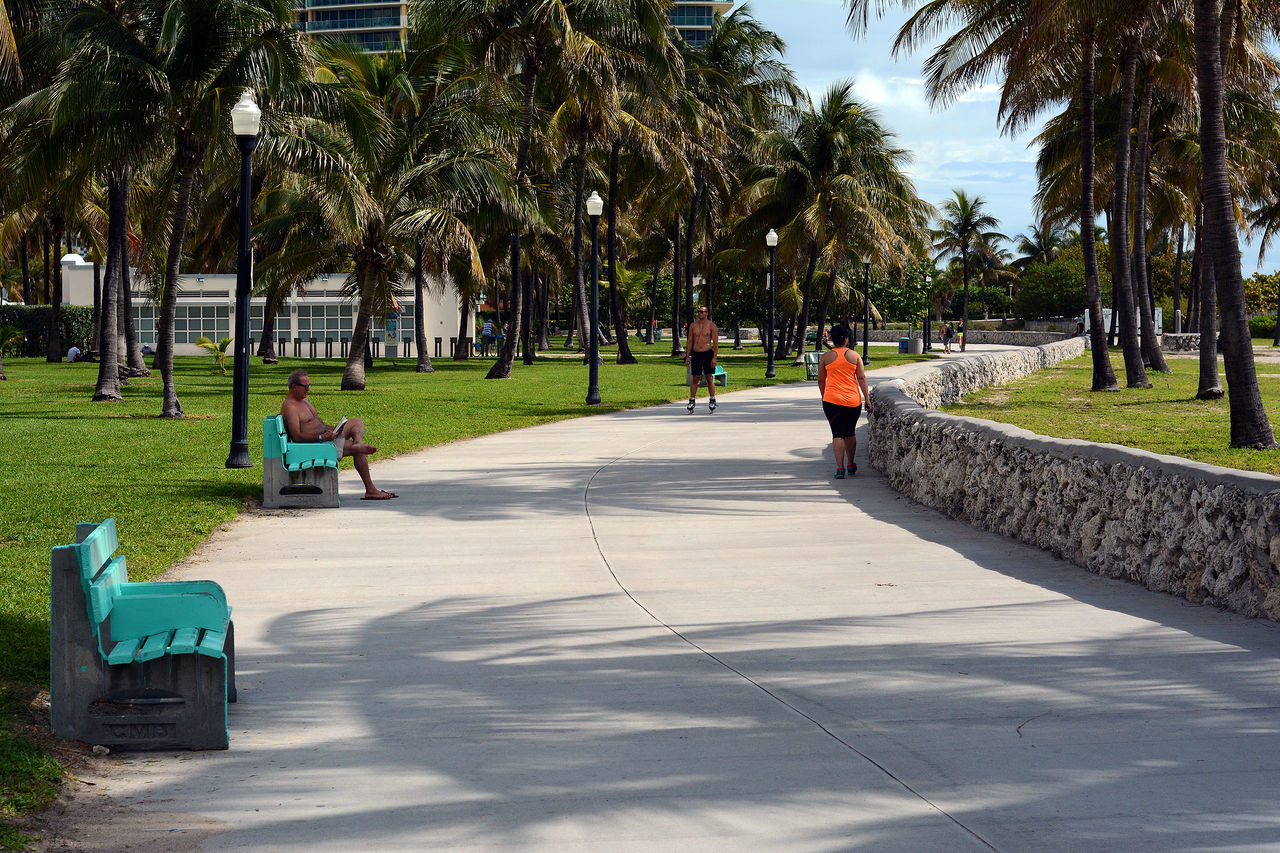 palm tree, tree, real people, walking, three people, lifestyles, men, day, park - man made space, outdoors, leisure activity, full length, women, shadow, growth, nature, togetherness, sky, adult, people