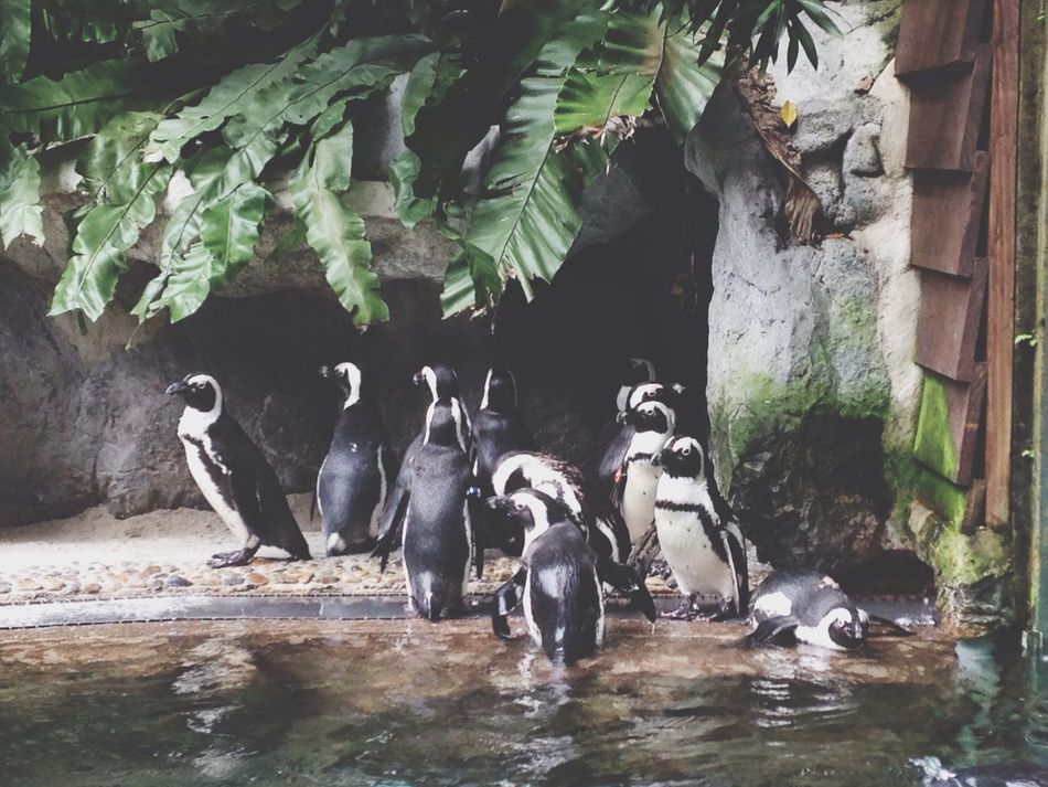 Beautiful stock photos of penguin, Animal Themes, Animals In The Wild, Day, Large Group Of Animals