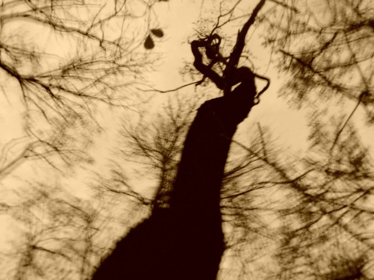 real people, silhouette, bare tree, one person, leisure activity, human hand, tree, human body part, branch, lifestyles, men, outdoors, day, close-up, sky, people