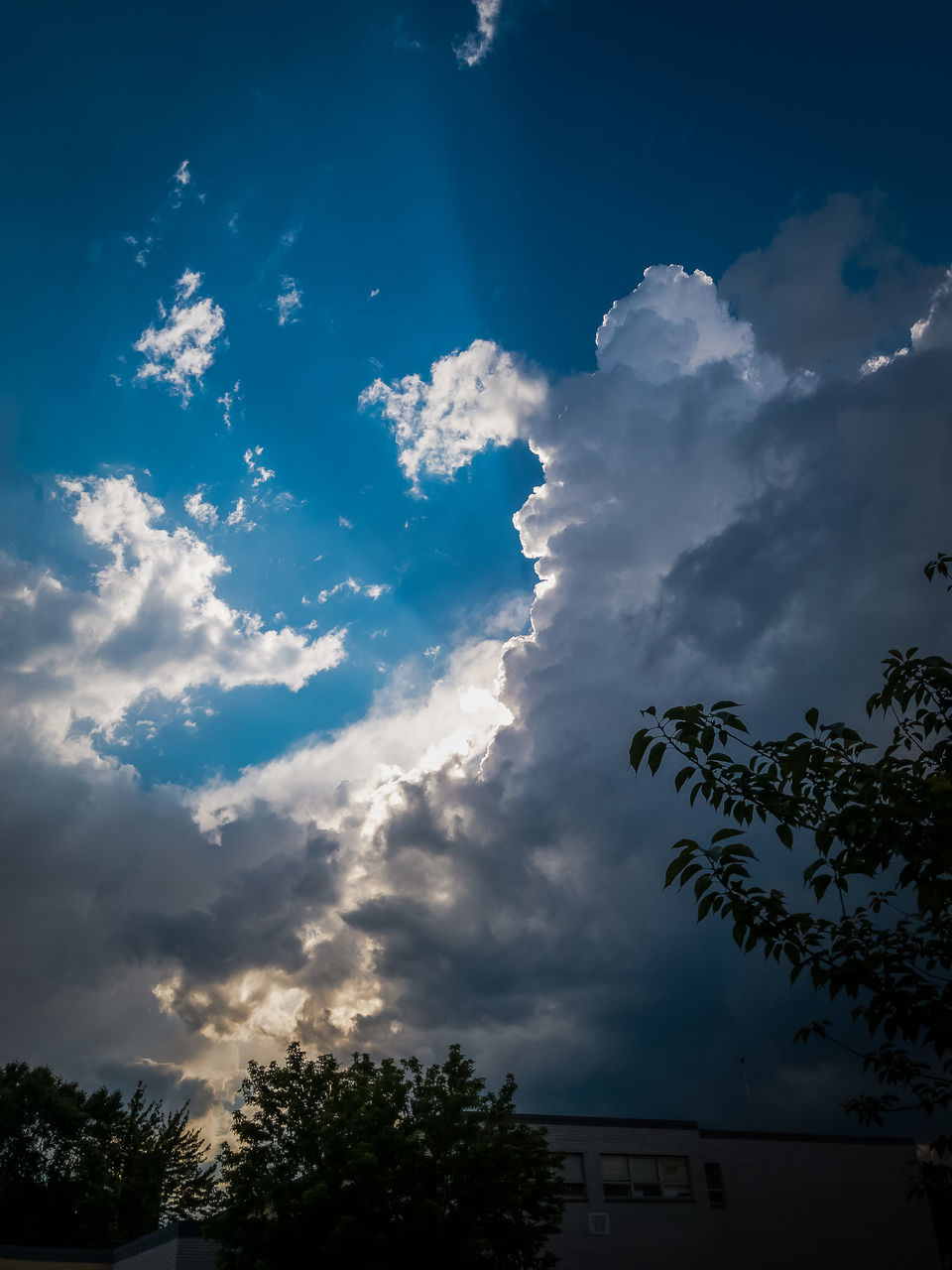 sky, cloud - sky, tree, low angle view, nature, beauty in nature, no people, silhouette, outdoors, scenics, day