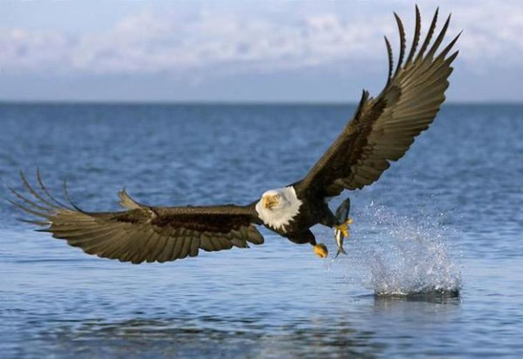 """Only an eagle can understand the word """"Freedom"""""""