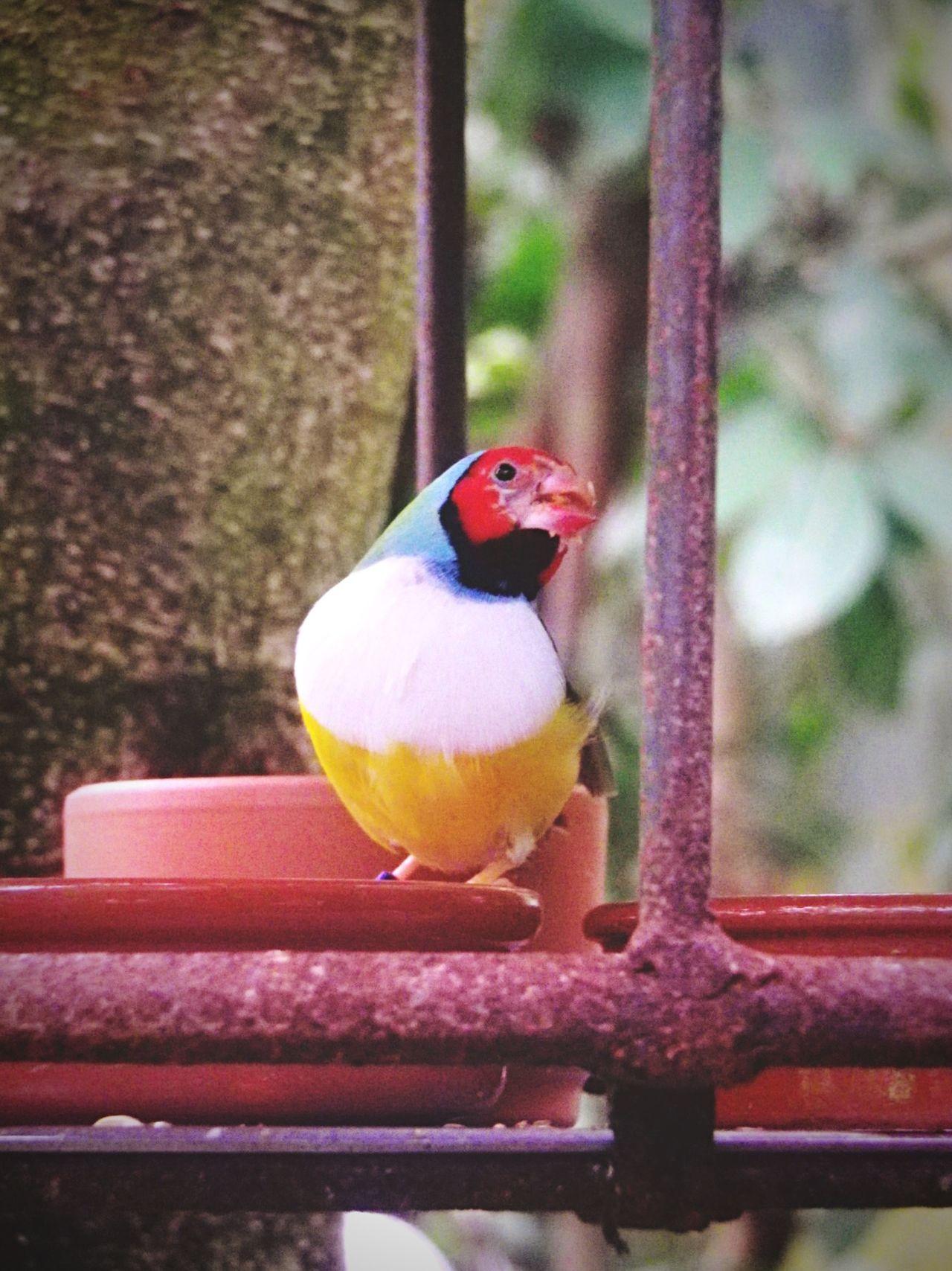 Bird Oiseau Normandie Naturospace Colors Photo Taking Photos Photography Animals Beautiful Animals