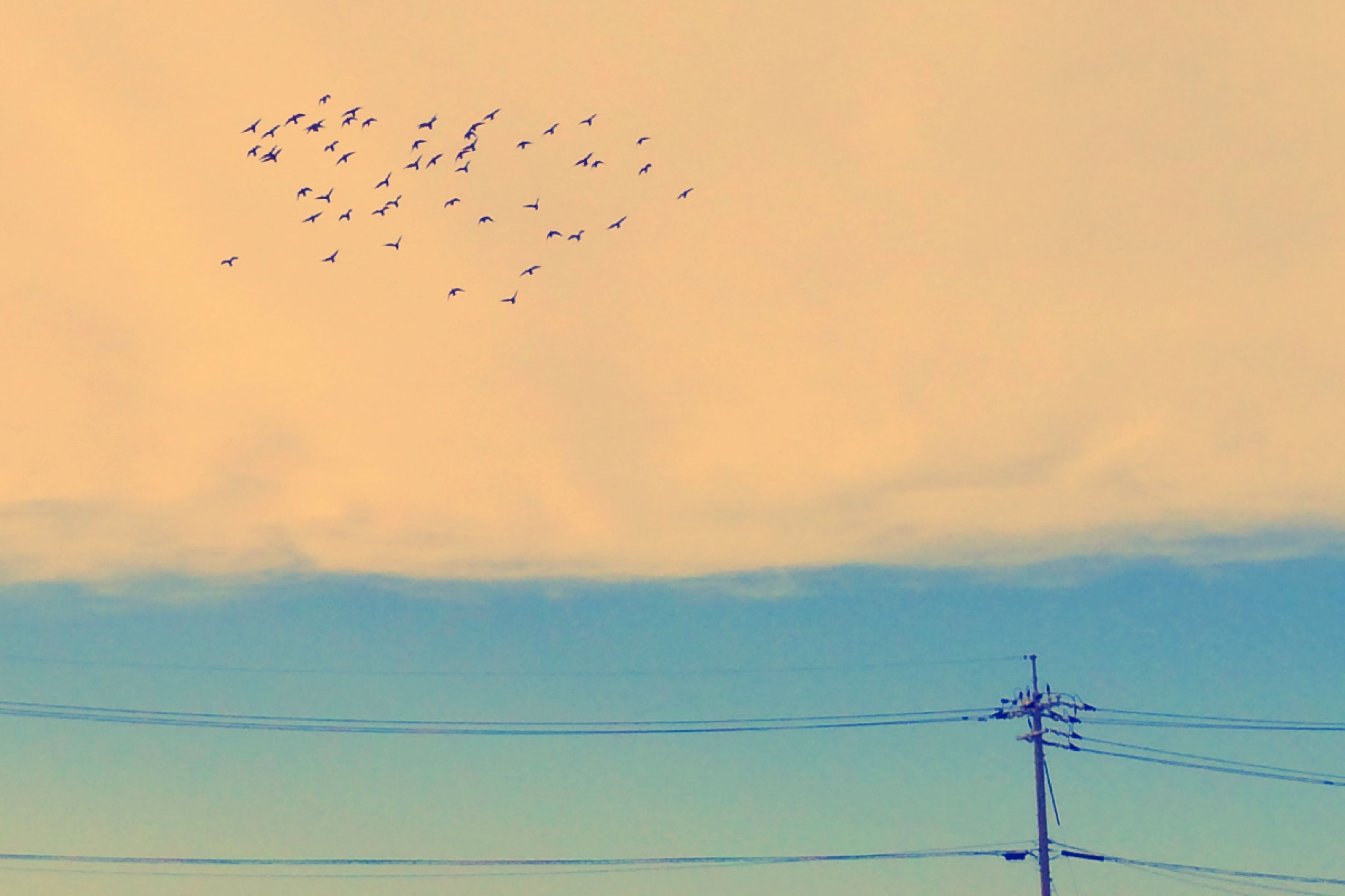 bird, low angle view, animal themes, flying, animals in the wild, wildlife, silhouette, power line, flock of birds, sky, sunset, fuel and power generation, cable, connection, technology, electricity, power supply, nature, outdoors