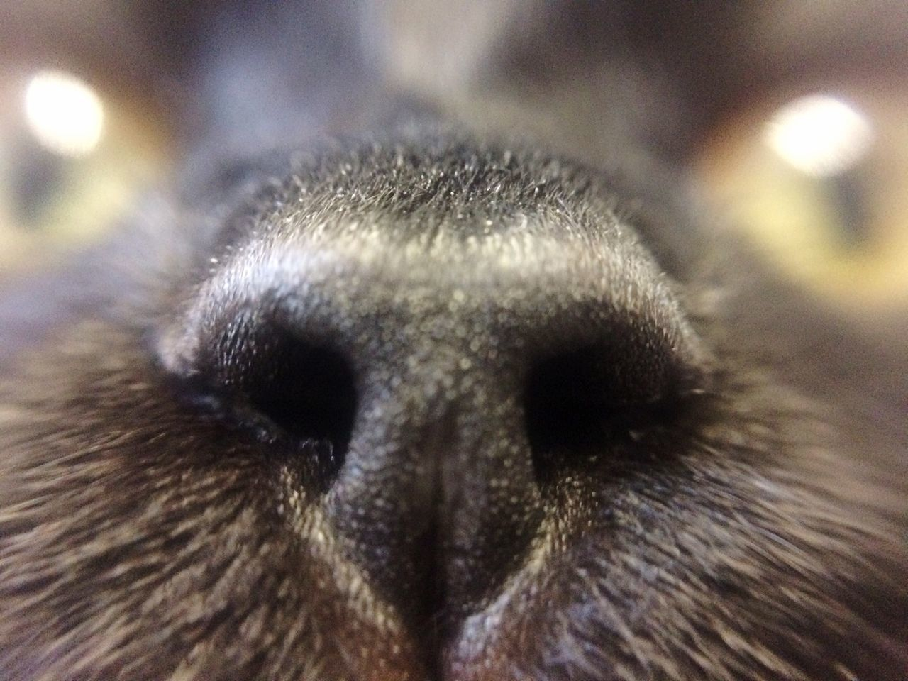 One Animal Macro Animal Themes Close-up Animal Body Part Domestic Animals Pets Animal Eye Animal Nose No People Day Eyeball Cat Fur Glasgow  Scotland Lens