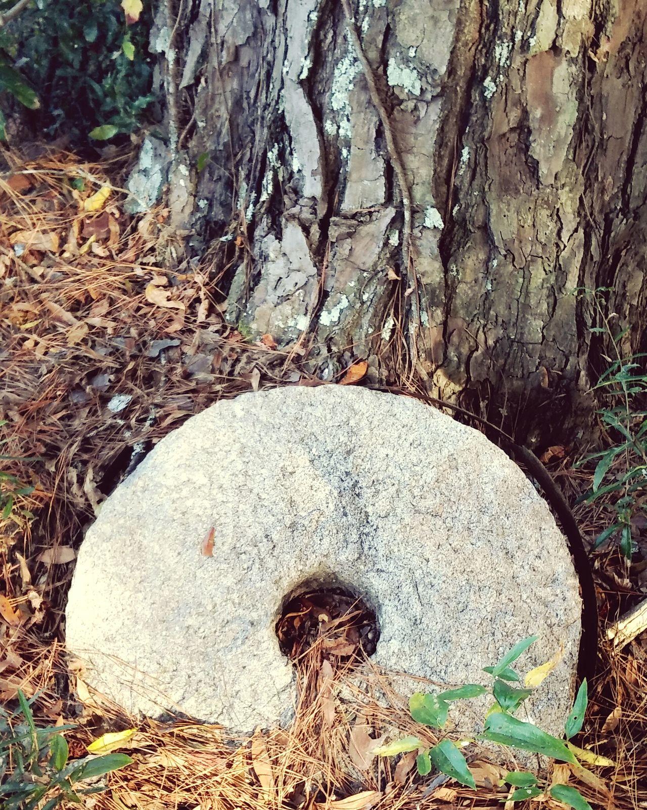 Vintage grinding stone Nature Outdoors Abandoned No People Close-up Vintage Grinding Stone First Eyeem Photo