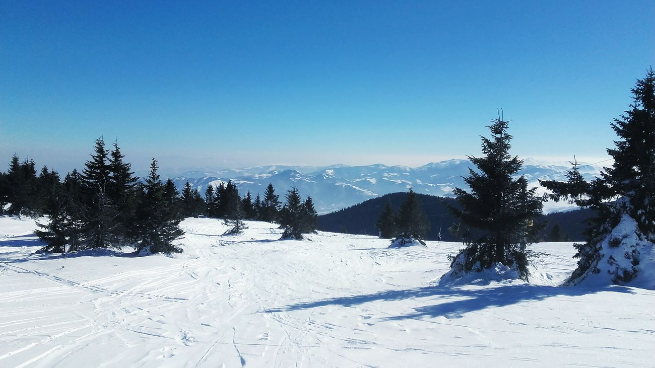 Snow Tree Winter Cold Temperature Mountain Nature Sky Beauty In Nature Beautiful Serbia Likeforlike Like4like Blue Sky Mountains Ski Skiing Snowboarding White Kopaonik, Serbia Kopaonik
