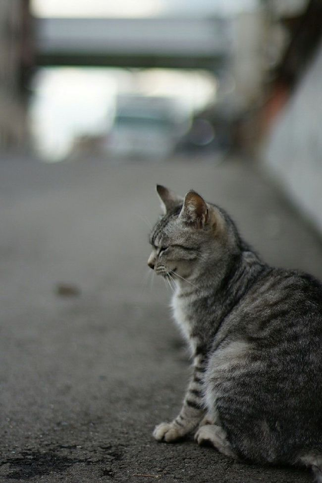EyeEm Cats 野良猫 Stray Cat Nofilter