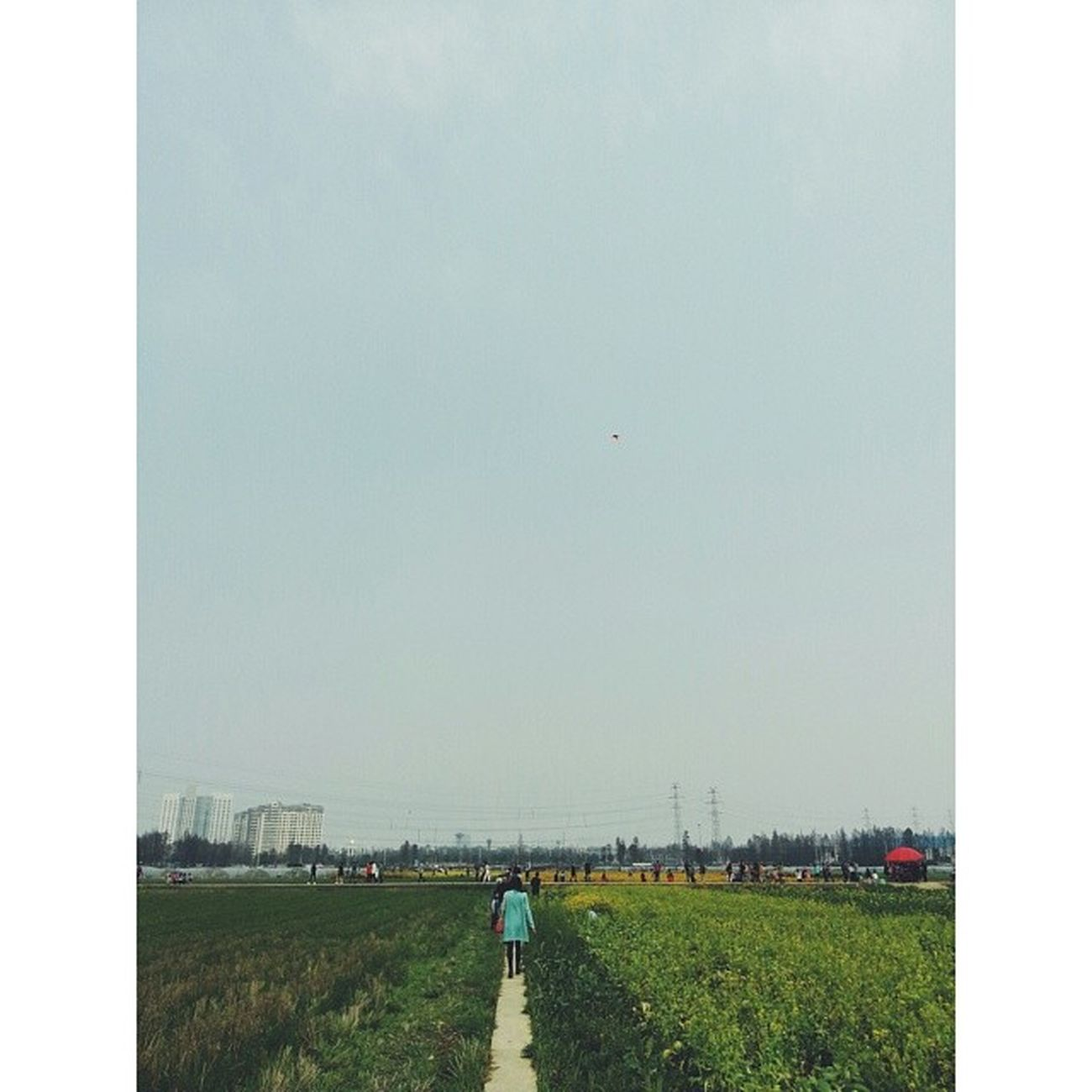 油菜花 湖南农业大学 长沙 Hunan vscocam changsha vsco sky china